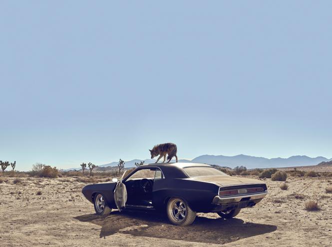 Фото №6 - Дикий: Джонни Депп в новом рекламном ролике Dior