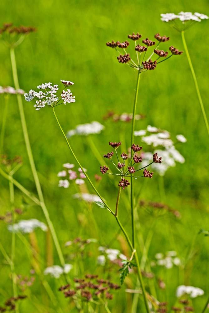 Фото №1 - Что мешает однолетним растениям жить дольше?