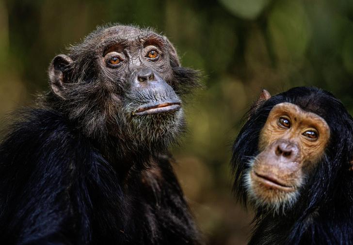 Фото №2 - Животные страсти: превратности любви в животном мире