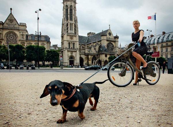 Фото №1 - Собаки на Сене