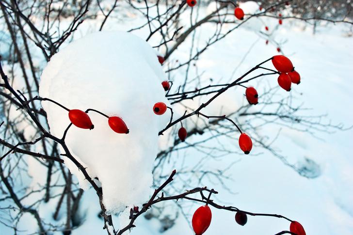 Фото №3 - Подлыжный корм: как выжить зимой в лесу без еды