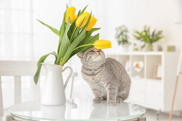 Фото №8 - 9 популярных цветов, которые смертельно опасны для котов