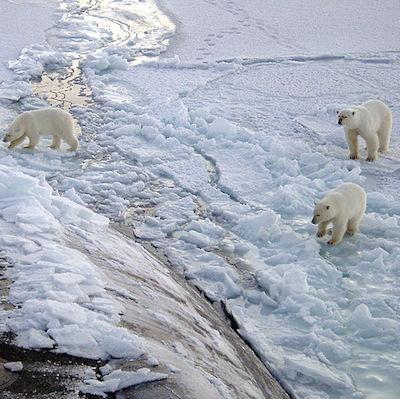 Фото №1 - На Фестивале РГО можно побывать на Северном полюсе и приготовить чуду
