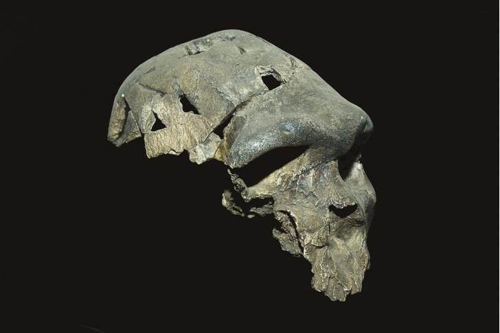 Фото №1 - Назван возраст загадочного родезийского человека