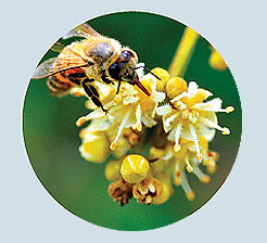 Фото №7 - Взятки сладки: 15 необычных видов меда