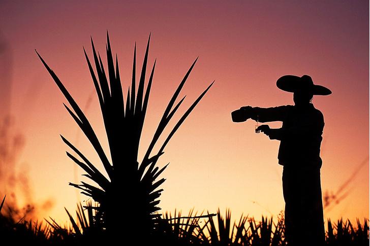 Фото №10 - Национальное достояние: текила — грусть агавы