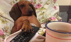 Искусство заработка в сети: как я раскрутила собаку в Instagram