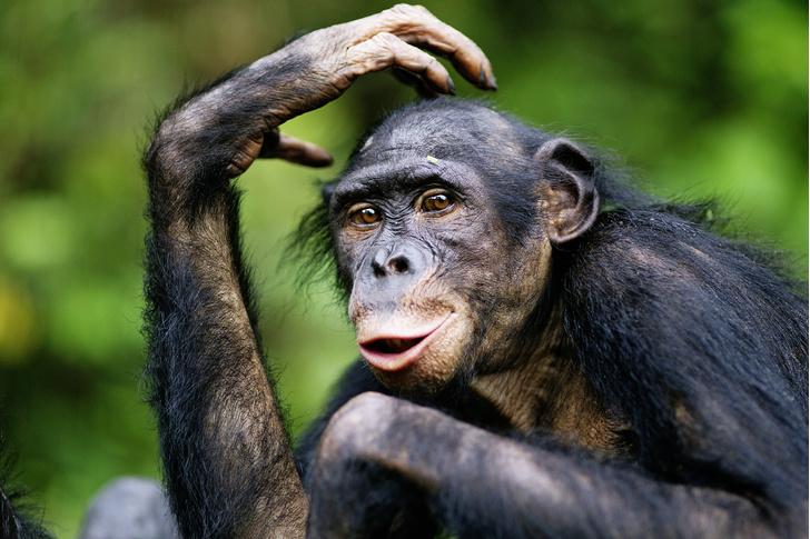 Фото №1 - Животные: самый умный, да?