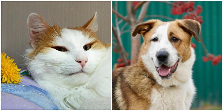 Фото №1 - Котопёс недели: возьми из приюта кота Оливера или пса Гусара