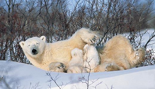 Фото №2 - Охотники на тюленей