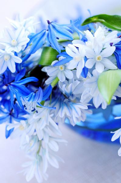 Цветы не только украшают интерьер, но и оздоравливают атмосферу вашего дома
