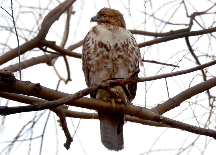 Фото №1 - Отличаются ли слезы птиц от слез человека