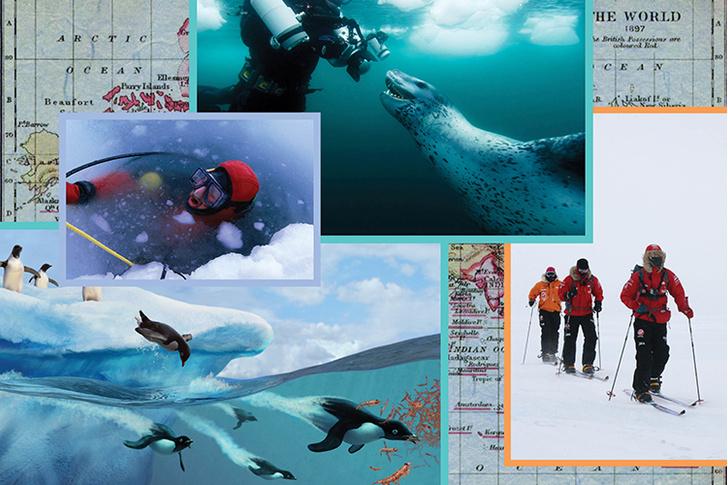 Дайвинг антарктида