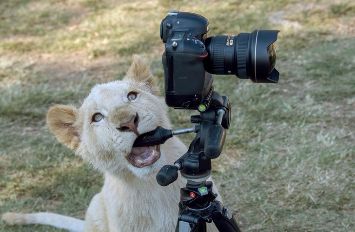 Фото №1 - Талантливый фотограф