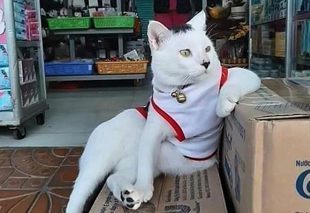 30 фотографий котов— хозяев магазинов