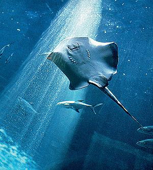Фото №1 - Какая рыба самая древняя?