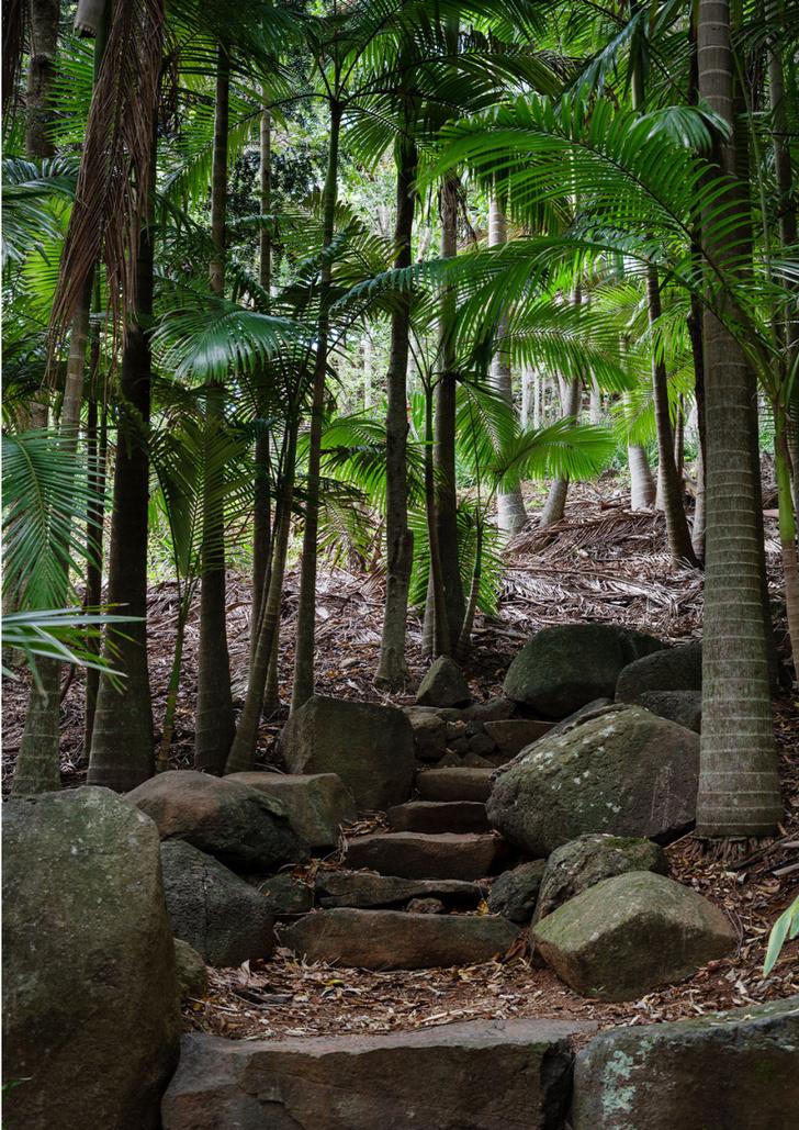 Фото №7 - Тропический сад в Австралии
