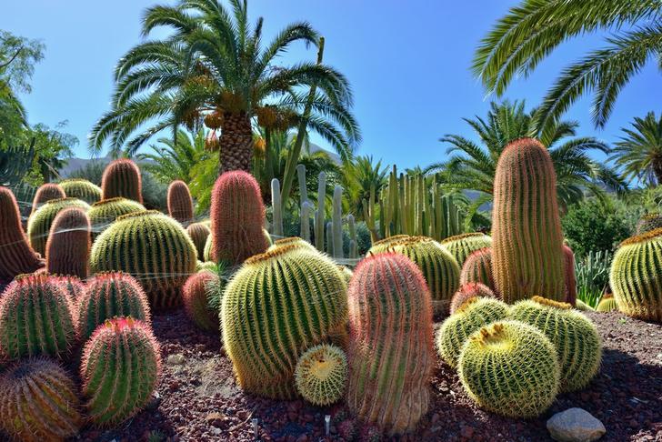 Фото №4 - Идея для отпуска: Испания, остров Гран-Канария