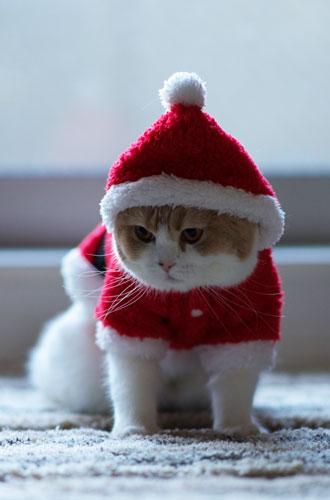 Фото №17 - Вырядился: забавные новогодние наряды домашних питомцев