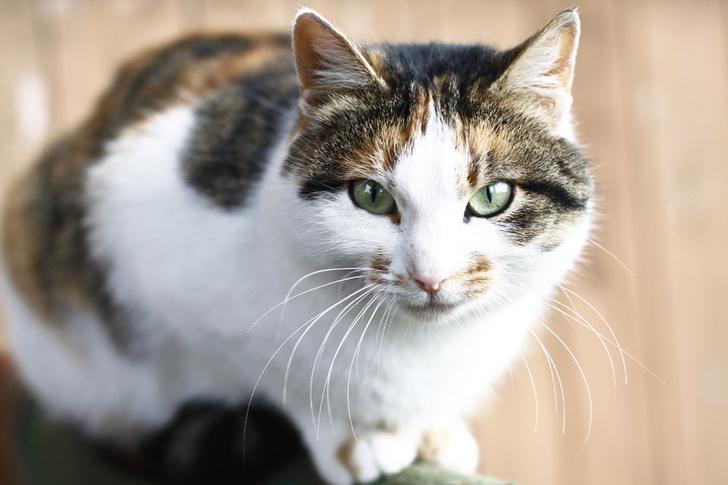 Фото №1 - Агрессивность кошек связали с их окрасом
