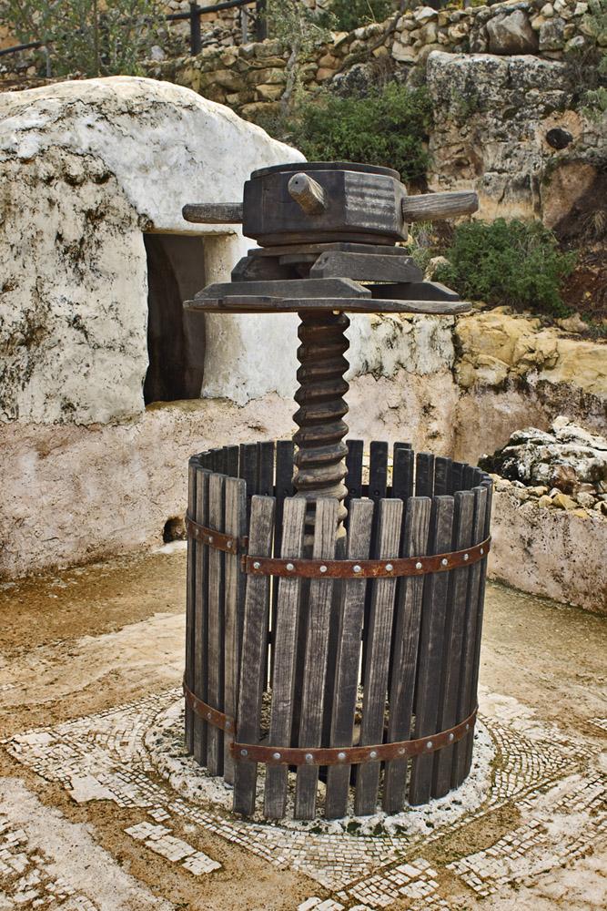 Фото №1 - В Израиле хотят воссоздать вино, которое пил Иисус