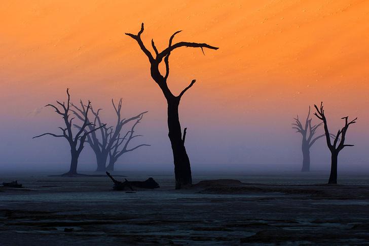 Фото №5 - Вернуться к корням: 7 самых экзотичных деревьев в мире