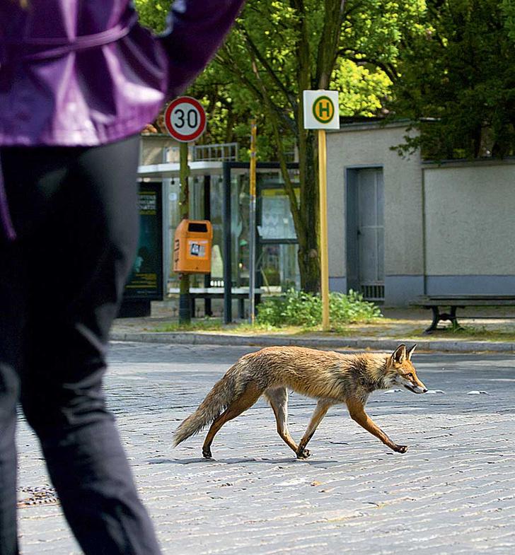 Фото №26 - Взятие Берлина