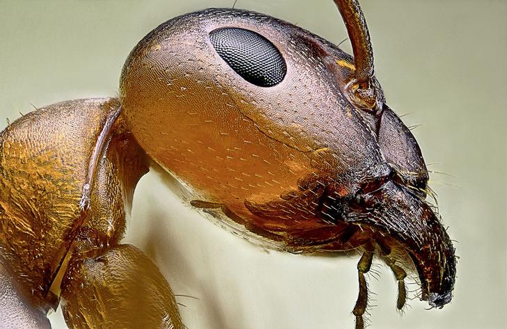 Фото №5 - Законы муравейника
