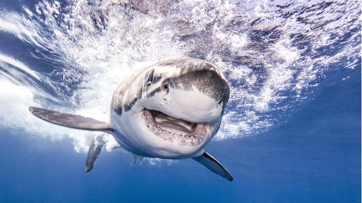 Фото №1 - Количество нападений акул за последние 20 лет удвоилось