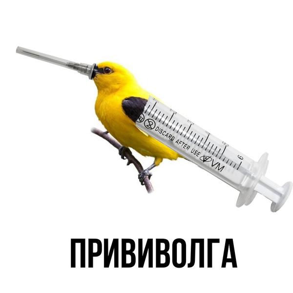 Фото №7 - «Я не одна, я со «Спутником»: посмотрите, как шутят о прививках в соцсетях