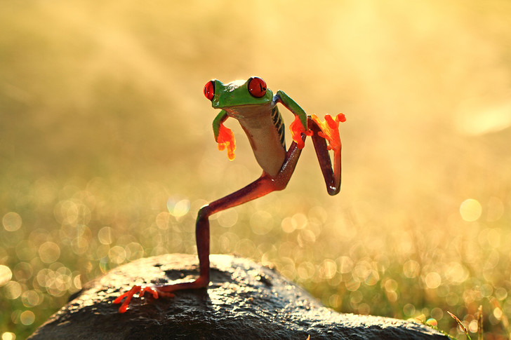 Фото №1 - Танцующая лягушка