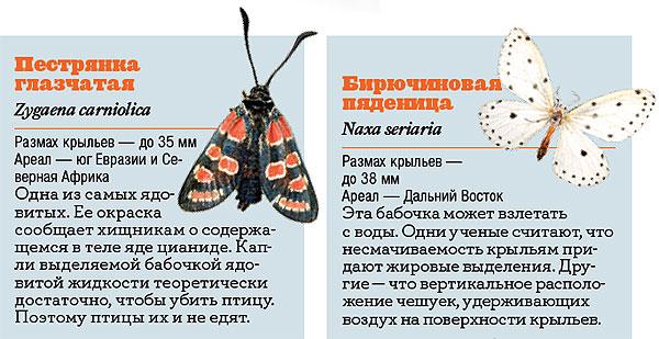 Фото №2 - Жизнь с размахом: энциклопедия бабочек