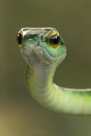 Фото №6 - К чему снятся змеи: что говорят сонники и психологи