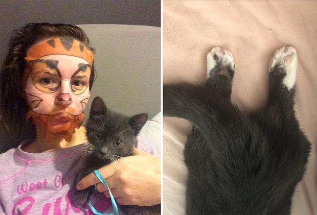 Статистика по словамПоказов в месяцманчкин кошка16 711манчкин кошка цена1 222манчкин фото2 351кот манчкин