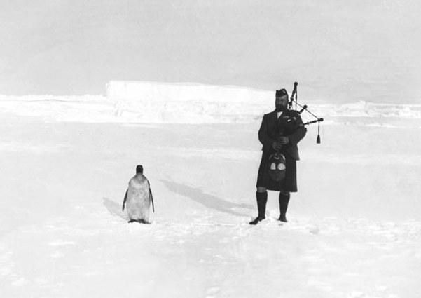 Фото №1 - Серенада для пингвина: история одного фото из Антарктиды