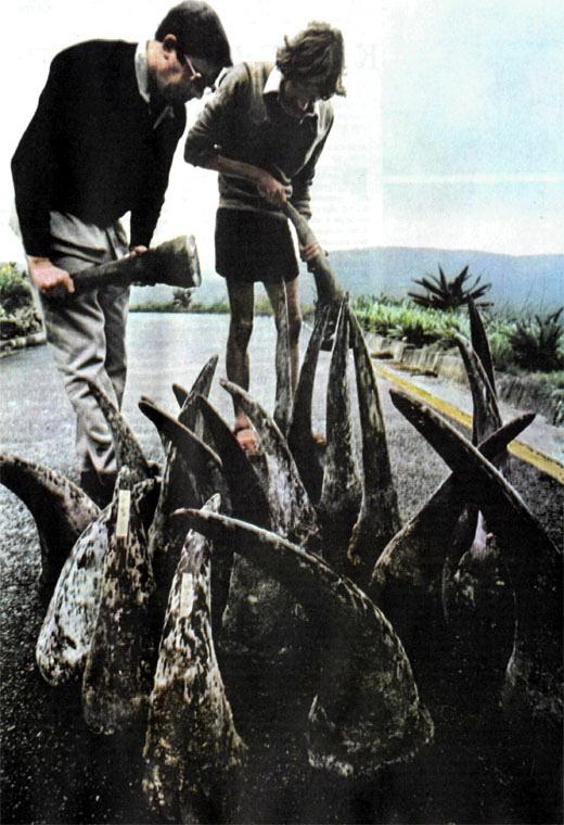 Фото №3 - «Спасите носорогов!»