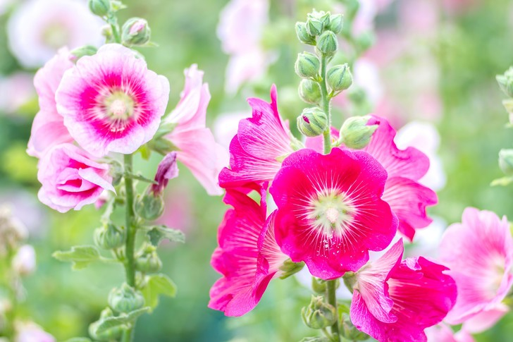 Фото №6 - Как выглядят анчар, мандрагора и другие таинственные растения из книг
