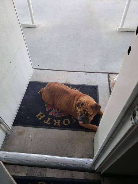 Фото №2 - «Знакомьтесь: Кейт Мосс»: Майли Сайрус взяла для съемок собаку из приюта и не смогла с ней расстаться