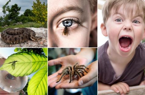 Укусы насекомых у детей: что делать, если ребенка искусали комары, пчелы или клещи?