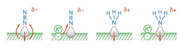Фото №2 - Поверхностность в химии приносит плоды