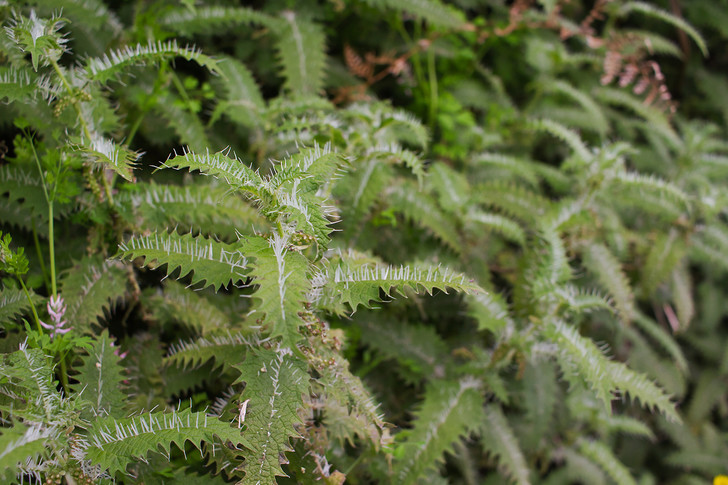 Фото №2 - 10 самых странных и страшных растений