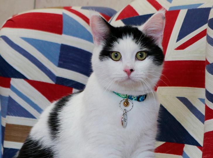 Фото №12 - Коты на службе Ее Величества