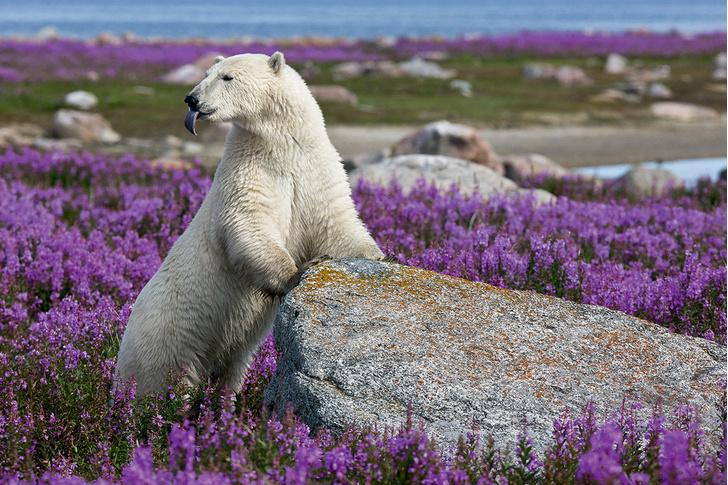 Фото №1 - Медвежье лето