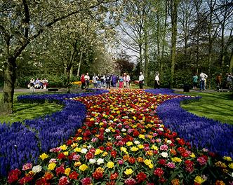 Фото №10 - Как тюльпаны стали национальным достоянием Нидерландов