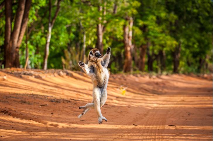 Фото №1 - Один кадр: Мадагаскар