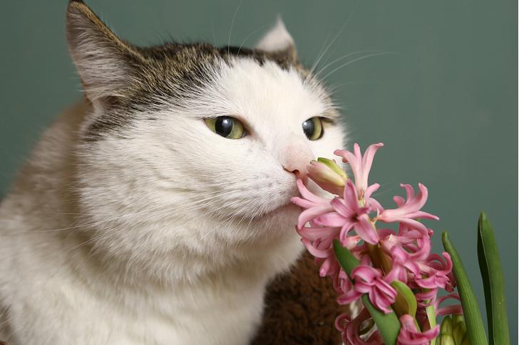 Фото №2 - 9 популярных цветов, которые смертельно опасны для котов