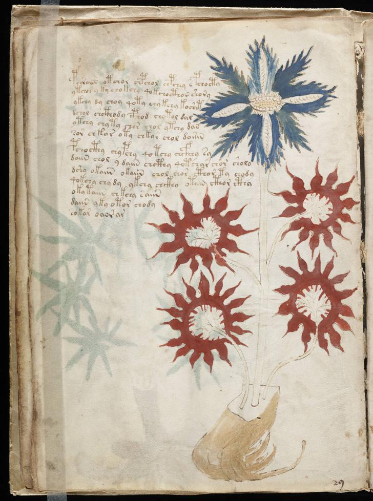 Фото №1 - Ученые приблизились к разгадке рукописи Войнича