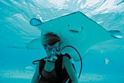 Фото №2 - Мушкетеры подводного царства