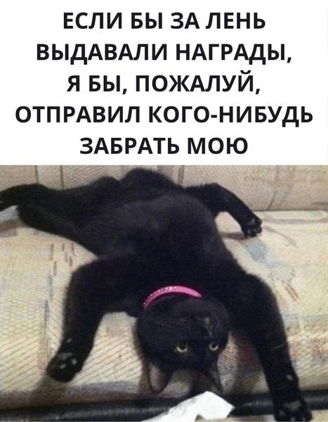 Фото №19 - Милота и угар: 20 дико ржачных мемов про животных