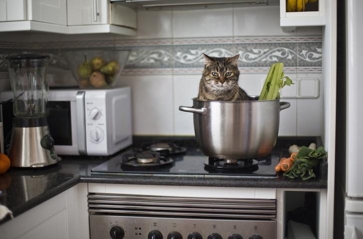 Фото №1 - Хозяйке на заметку: что нельзя держать рядом с плитой